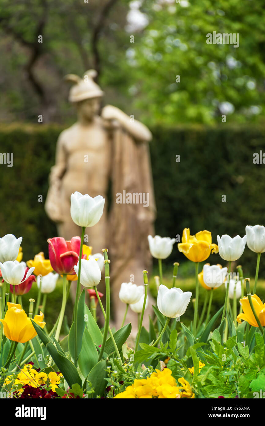 Tulips in front of antique statue on spa island in Piestany (SLOVAKIA) - Stock Image