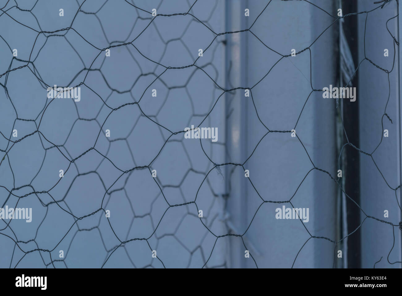 Up close, isolated shot of chicken wire, with a white wall and a ...