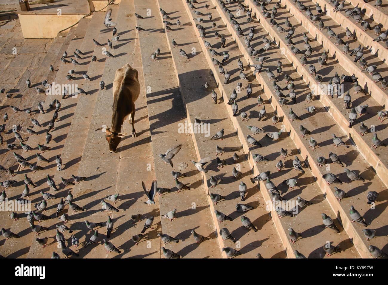 Life along the bathing ghats, Pushkar, Rajasthan, India - Stock Image