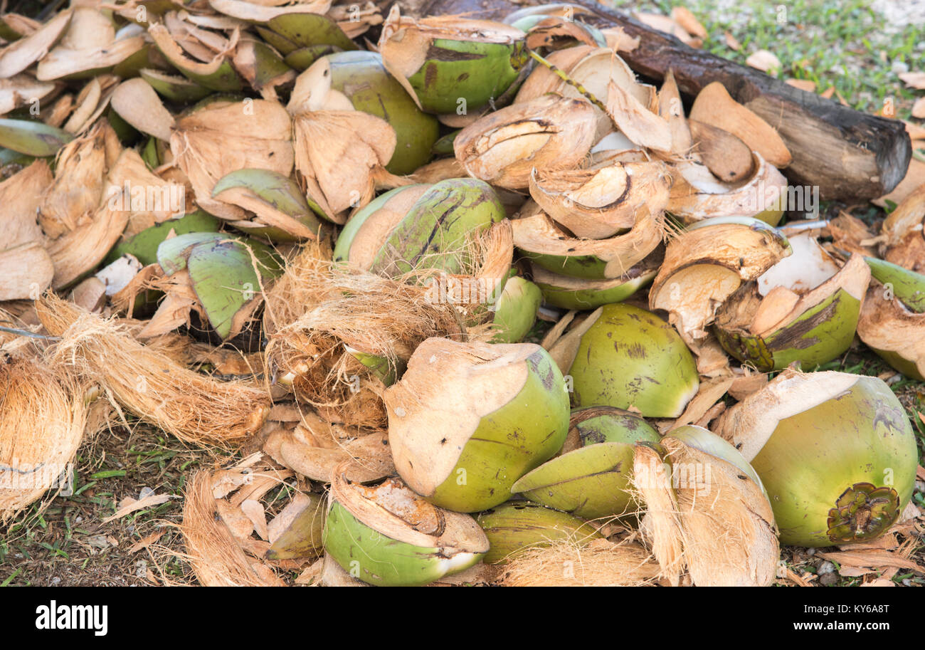 Pile of fresh cut coconut shells on ground in New Caledonia Stock Photo