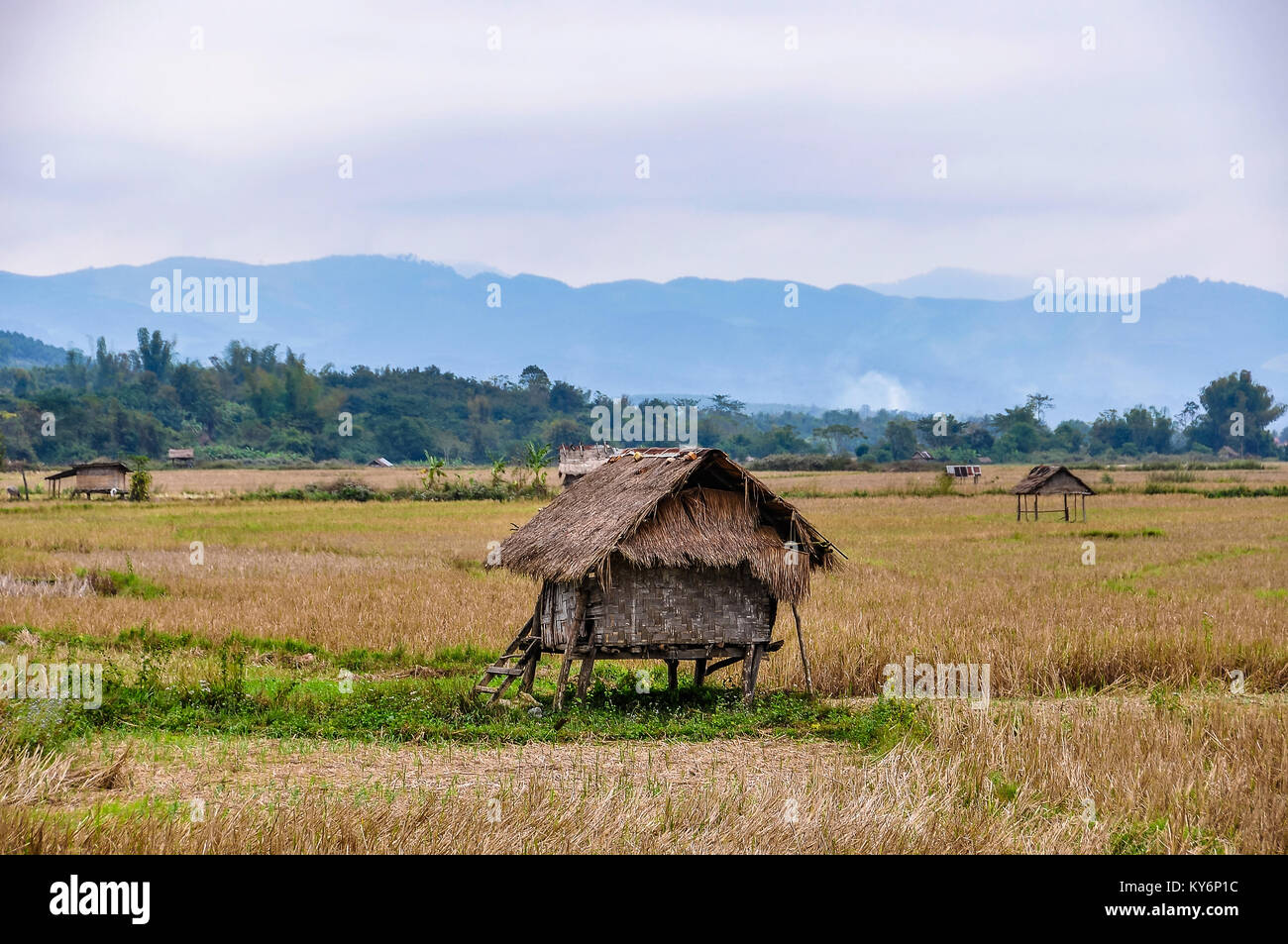 Hut in the countryside in the village Luang Nam Tha, Northern Laos - Stock Image