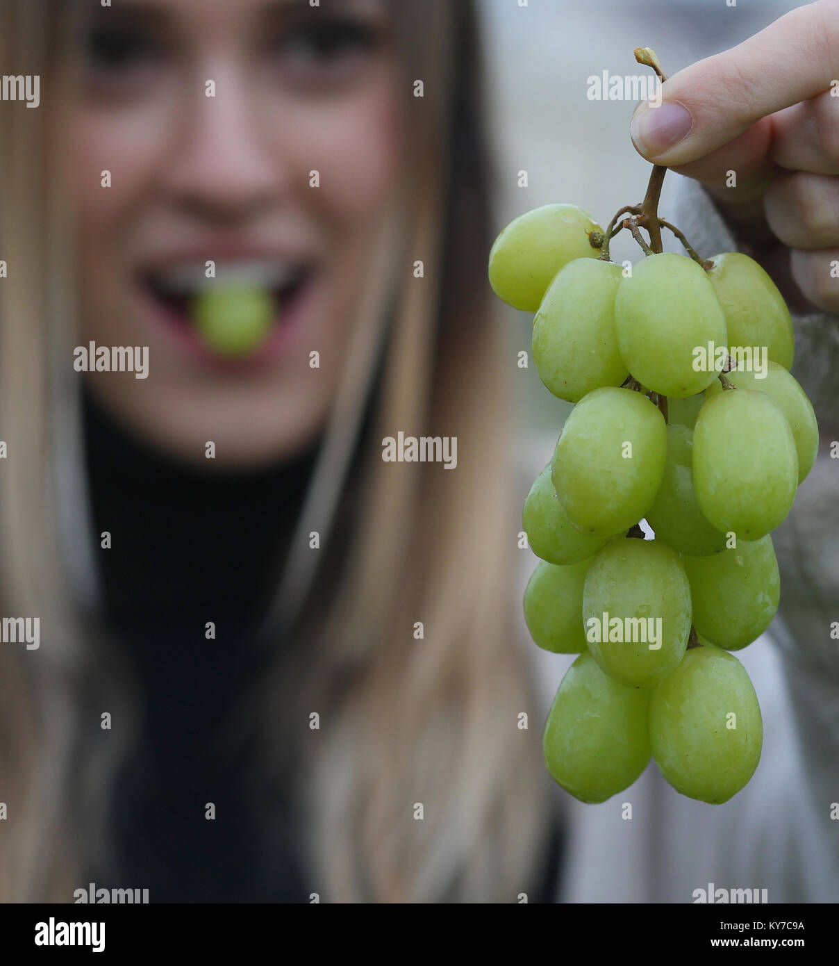 In Spain it's a tradition to eat twelve grapes for New Year's. A young woman eats grapes on New Year's - Stock Image