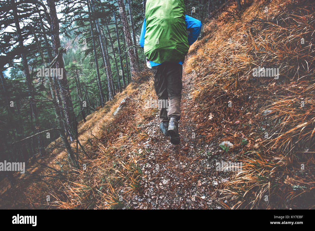 Backpacker hiking in forest landscape Travel Lifestyle concept adventure active vacations outdoor into the wild - Stock Image