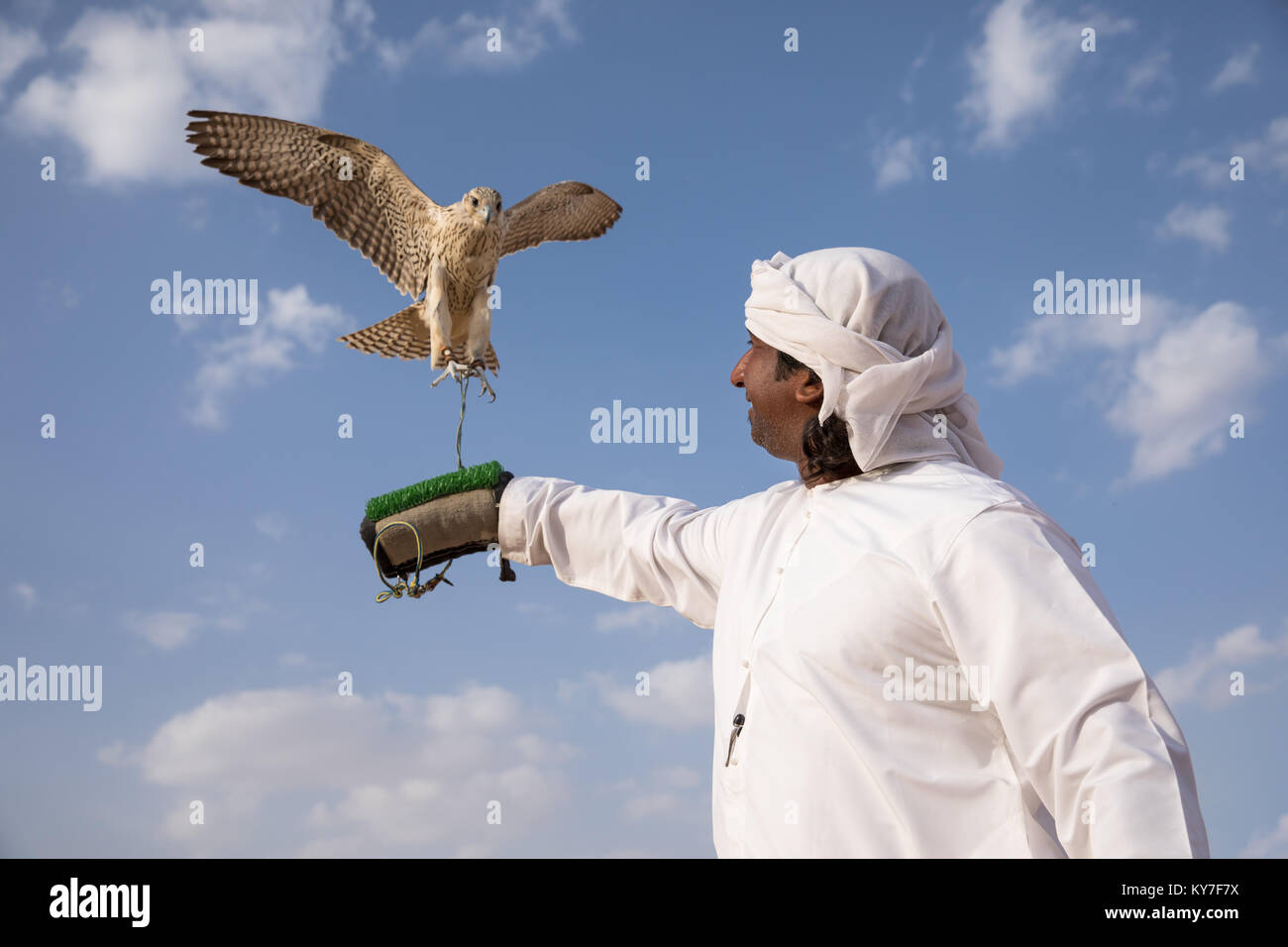 Abu Dhabi, UAE - Dec 15, 2017: Man in a traditional emirati dress proudly posing with his trained show falcon. Stock Photo