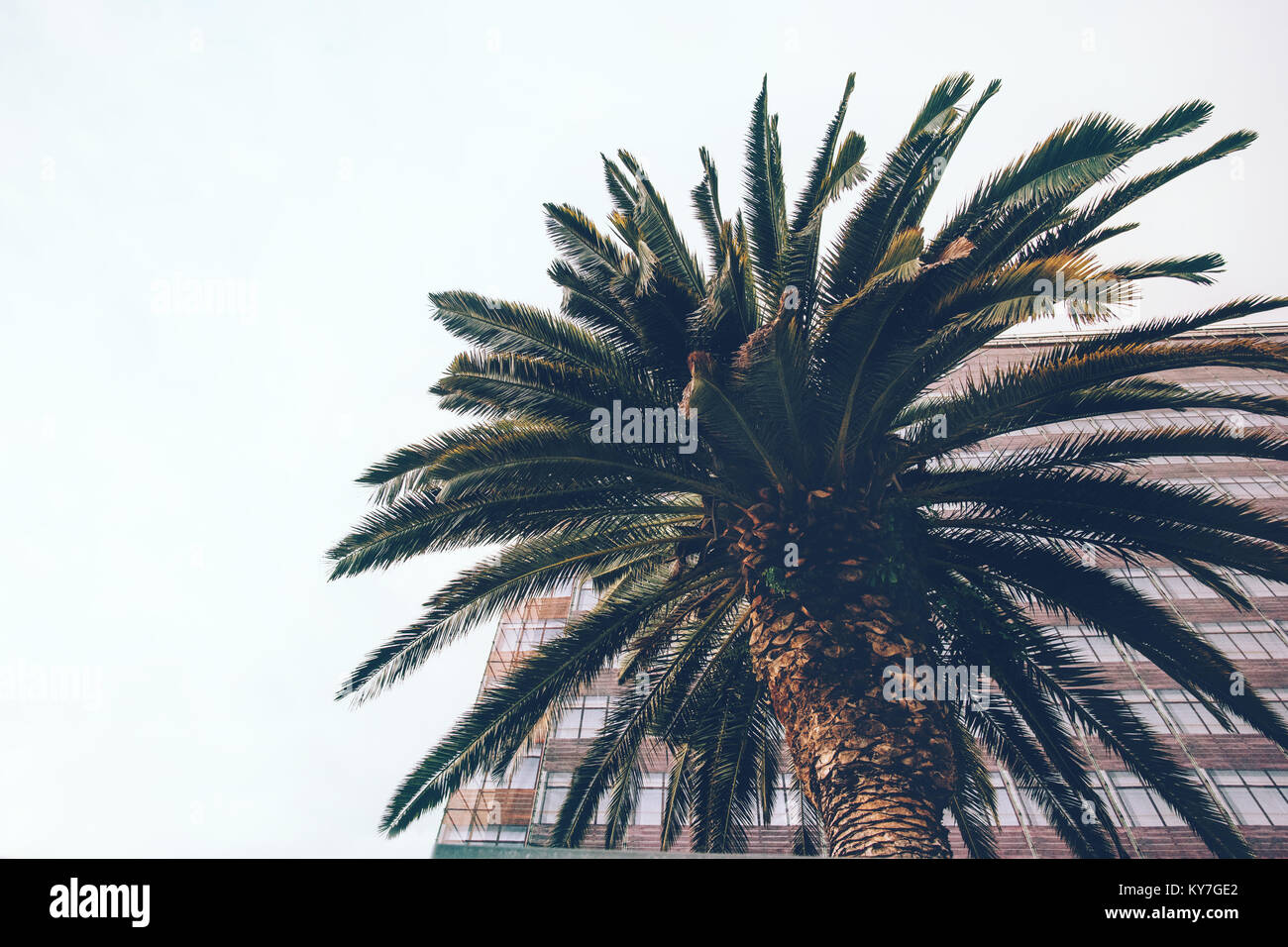 Palm tree in tropical city minimal landscape background - Stock Image