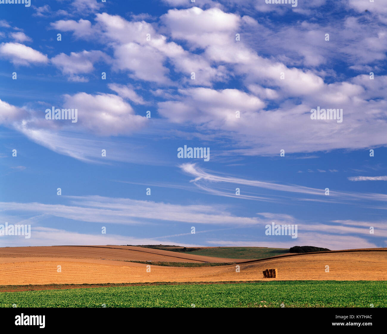 Agricultural landscape near Calais, Pas de Calais, France, - Stock Image