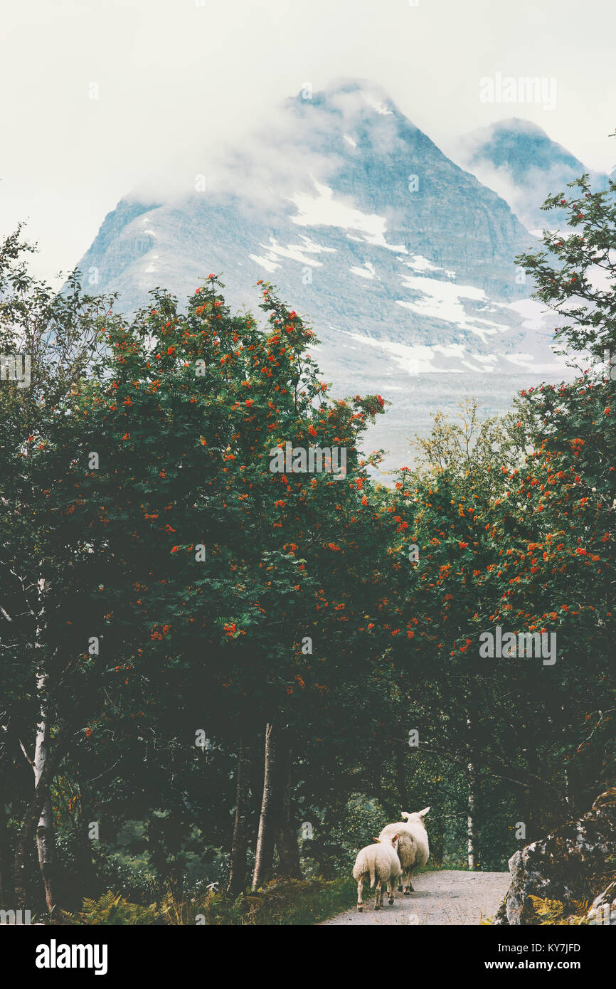 Mountains Landscape and ships walking in rowan berry forest in Norway Travel scenery scandinavian nature - Stock Image