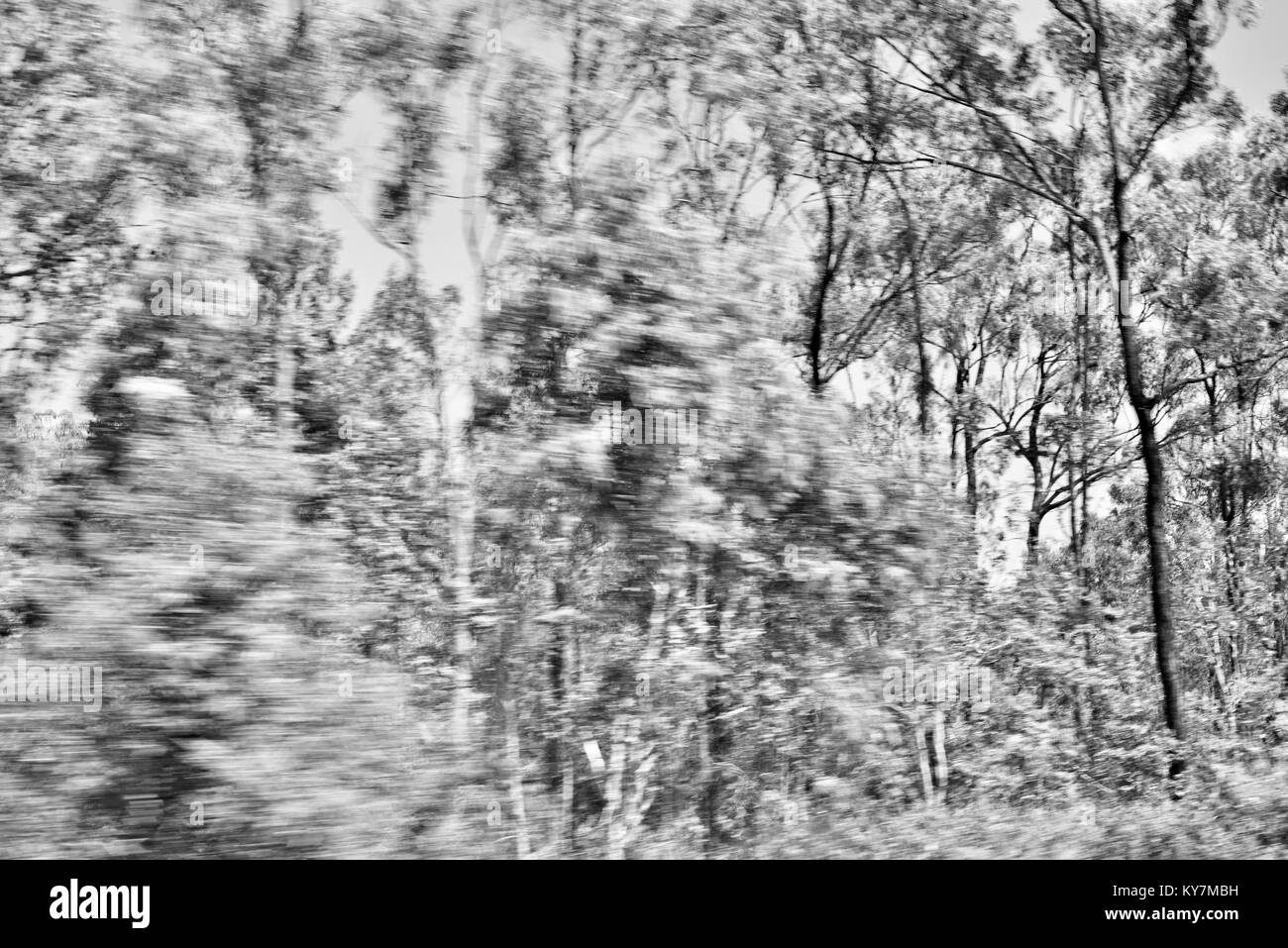 Trees in motion, Farmland and bush near Clairview, Queensland, Australia - Stock Image