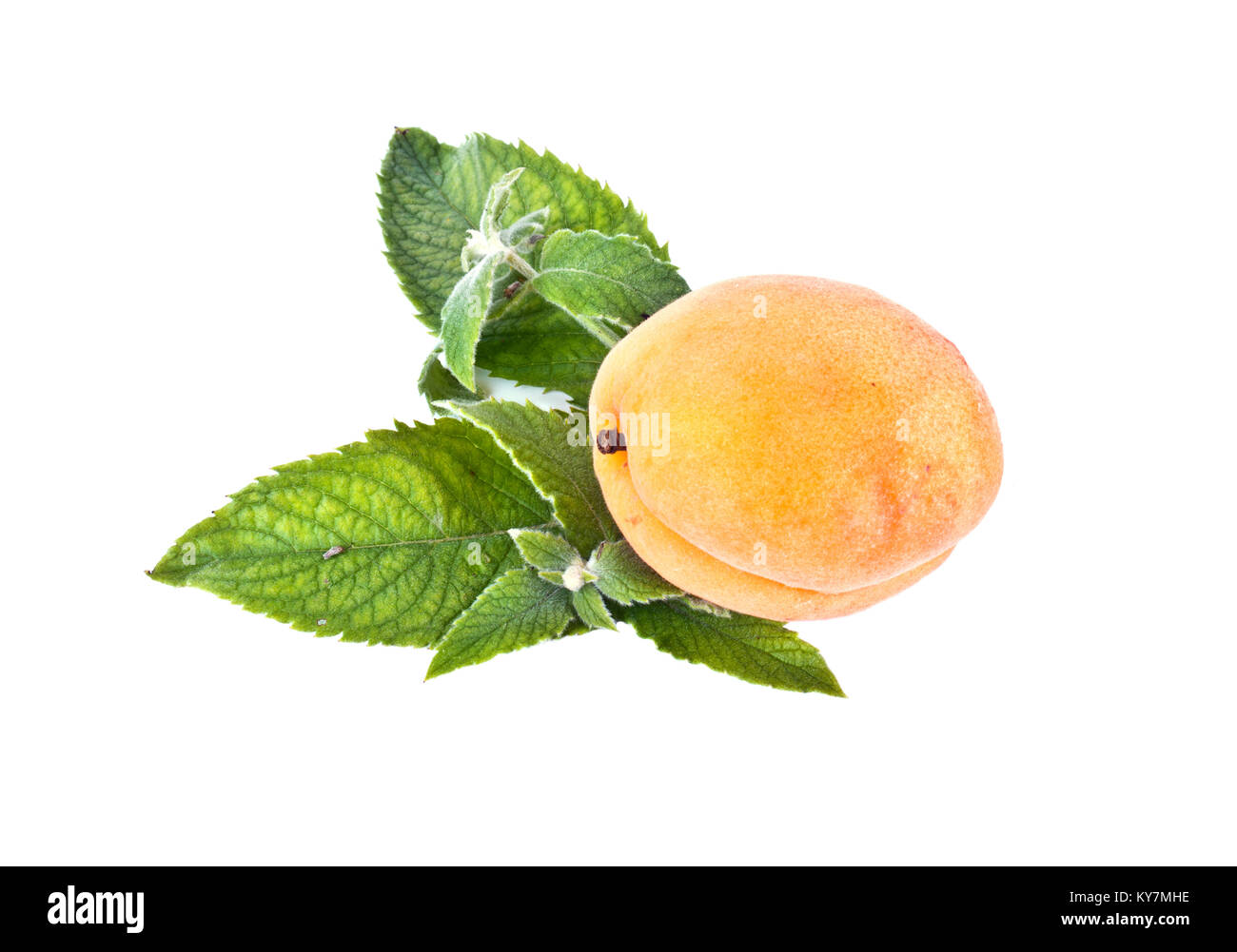 Ripe yellow apricot and mint leaves isolated on white background - Stock Image