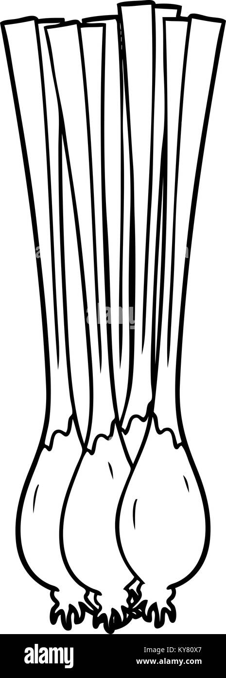 Vector Image. Onions Outline Black And White In Hand Drawing.. Royalty Free  Cliparts, Vectors, And Stock Illustration. Image 86227040.