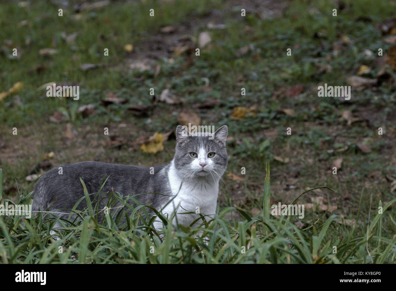 Feral Cat Hunting Stock Photos & Feral Cat Hunting Stock Images - Alamy