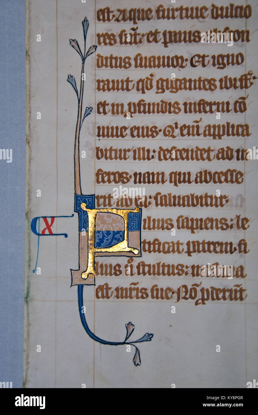Detail of a letter on a page from a 14th Century Latin Vulgate Bible, written in England on vellum.The capital letter - Stock Image