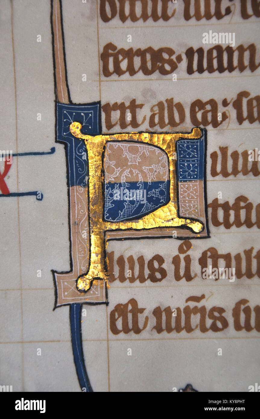 Detail of a letter P on a page from a 14th Century Latin Vulgate Bible, written in England on vellum.The capital - Stock Image