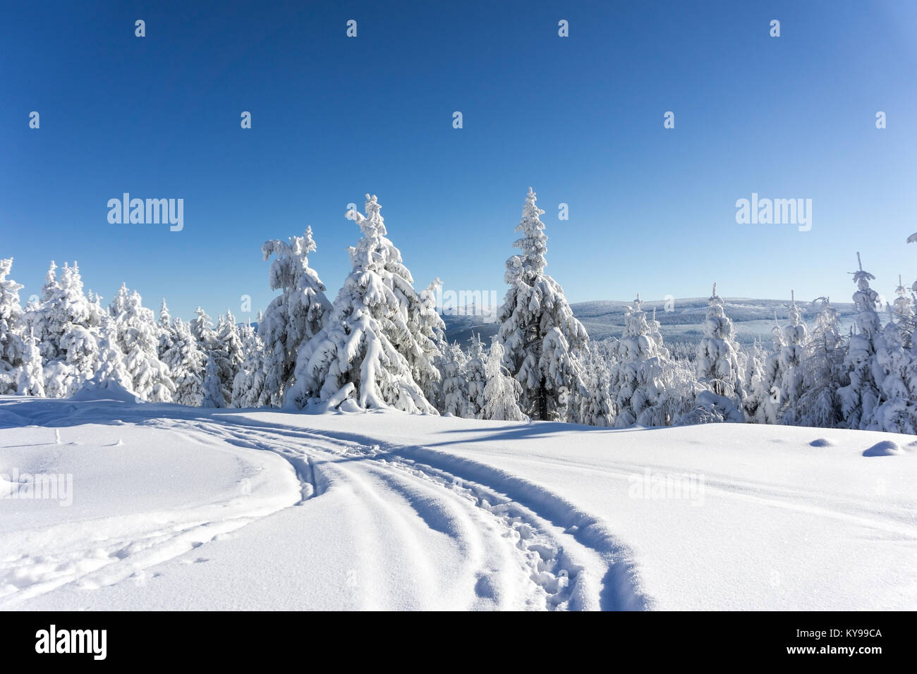 Winter mountains landscape. Trees covered with fresh snow in sunny day. Karkonosze,  Giant Mountains, Poland. - Stock Image