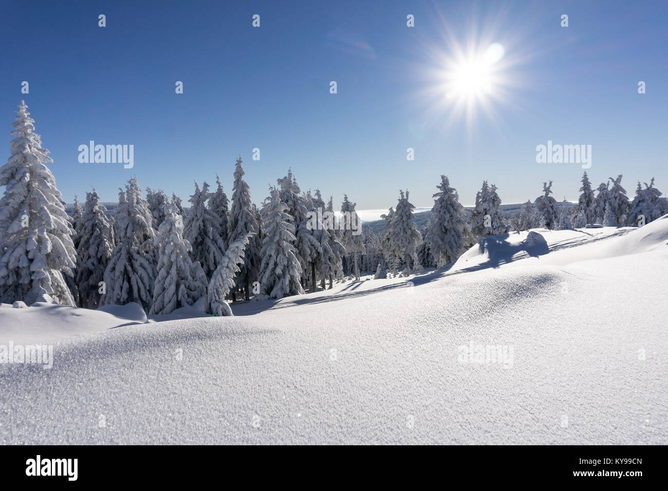 Winter trees in mountains covered with fresh snow in sunny day. Karkonosze,  Giant Mountains, Poland. - Stock Image
