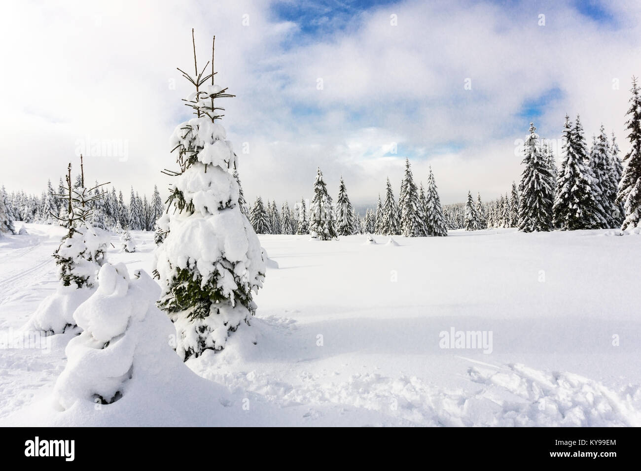 Winter mountains landscape.Trees covered with fresh snow, cloudy sky. Karkonosze,  Giant Mountains, Poland. - Stock Image