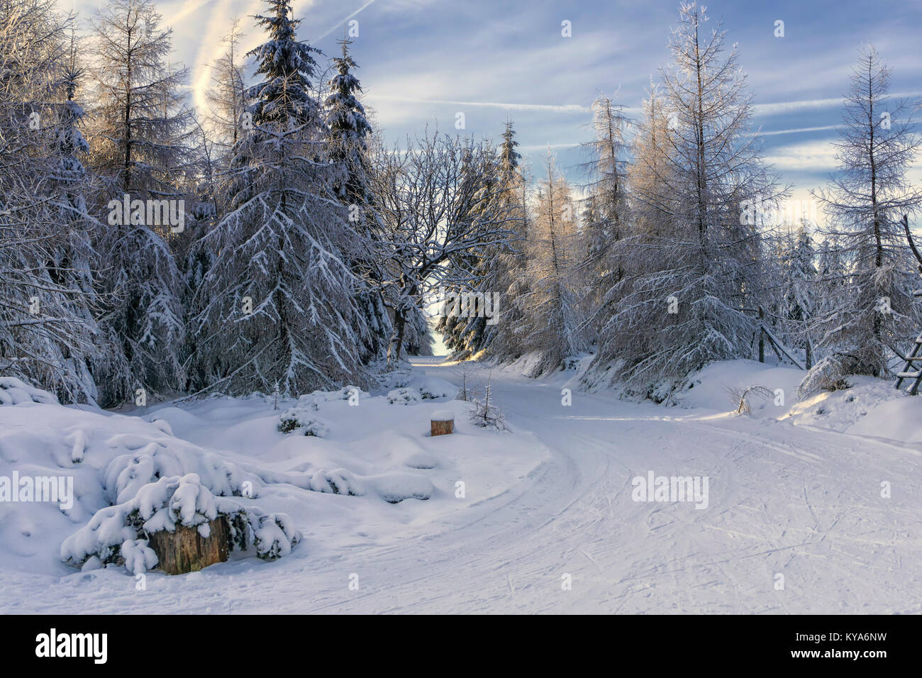 Road in mountains at winter sunny day. Trees covered with hoarfrost illuminated by the sun. Groomed ski trails for - Stock Image