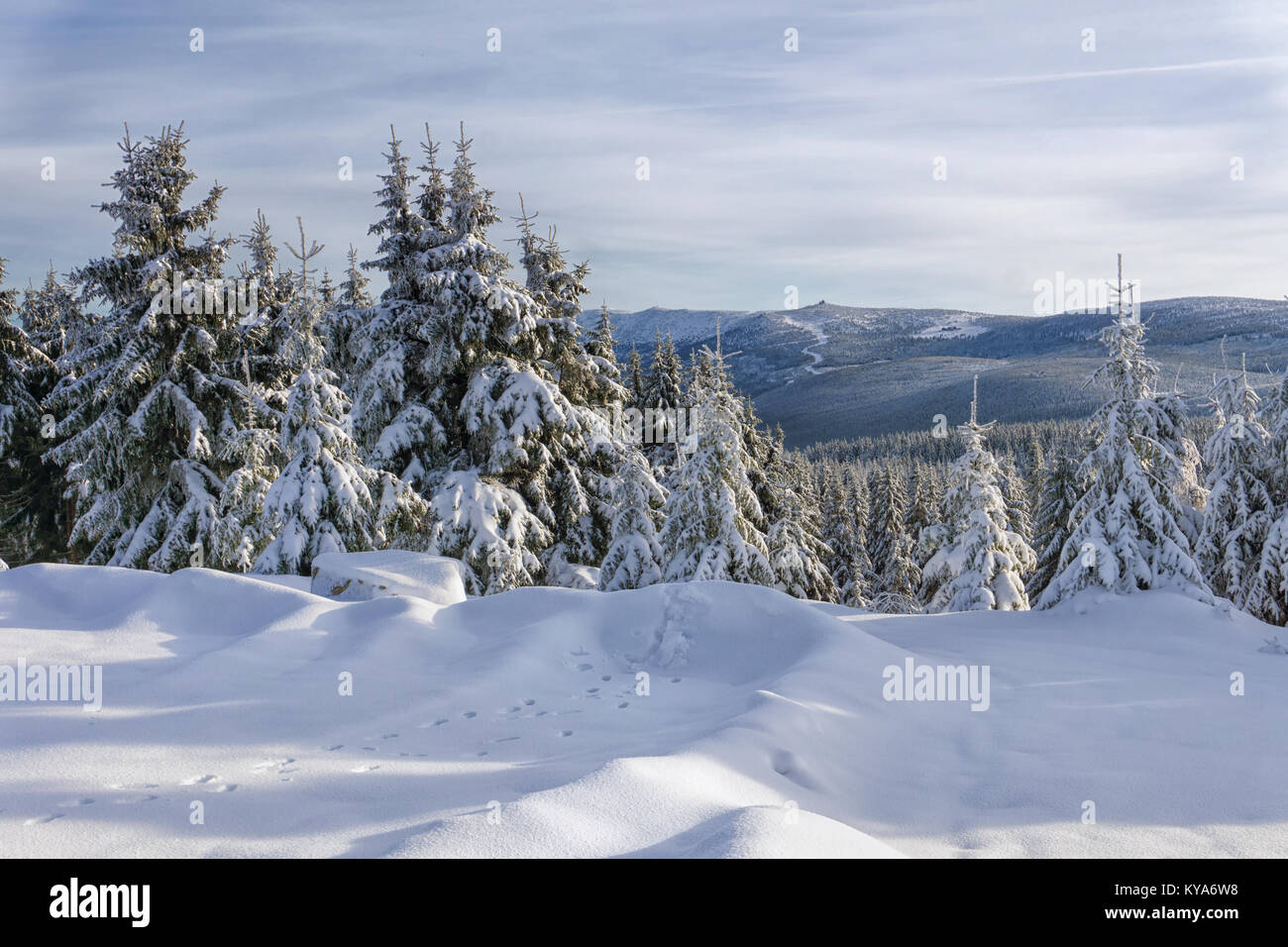Winter landscape, trees in mountains covered with hoarfrost in sunny day and animal tracks on the snow. Szrenica - Stock Image