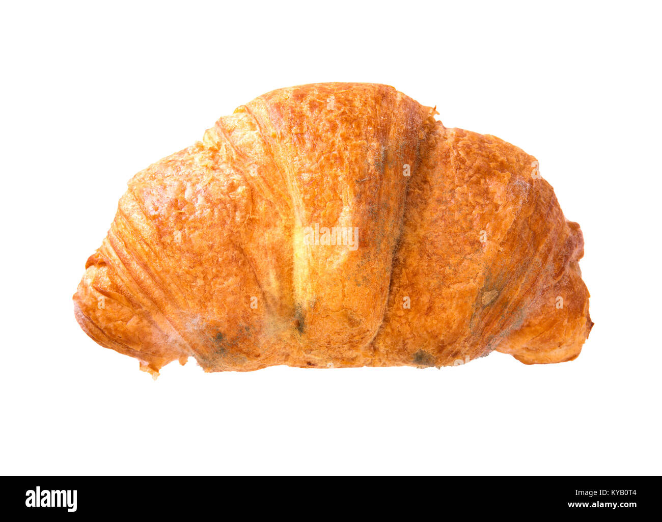 Moldy Croissant on a white background - Stock Image