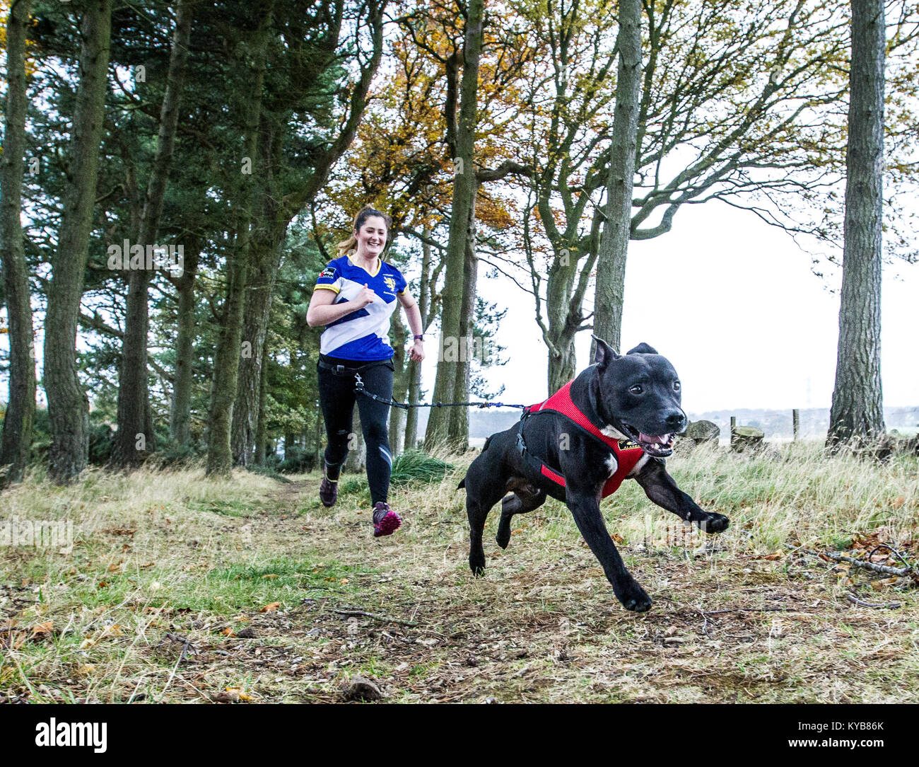 Dogs and runners competing in CaniCross - Stock Image