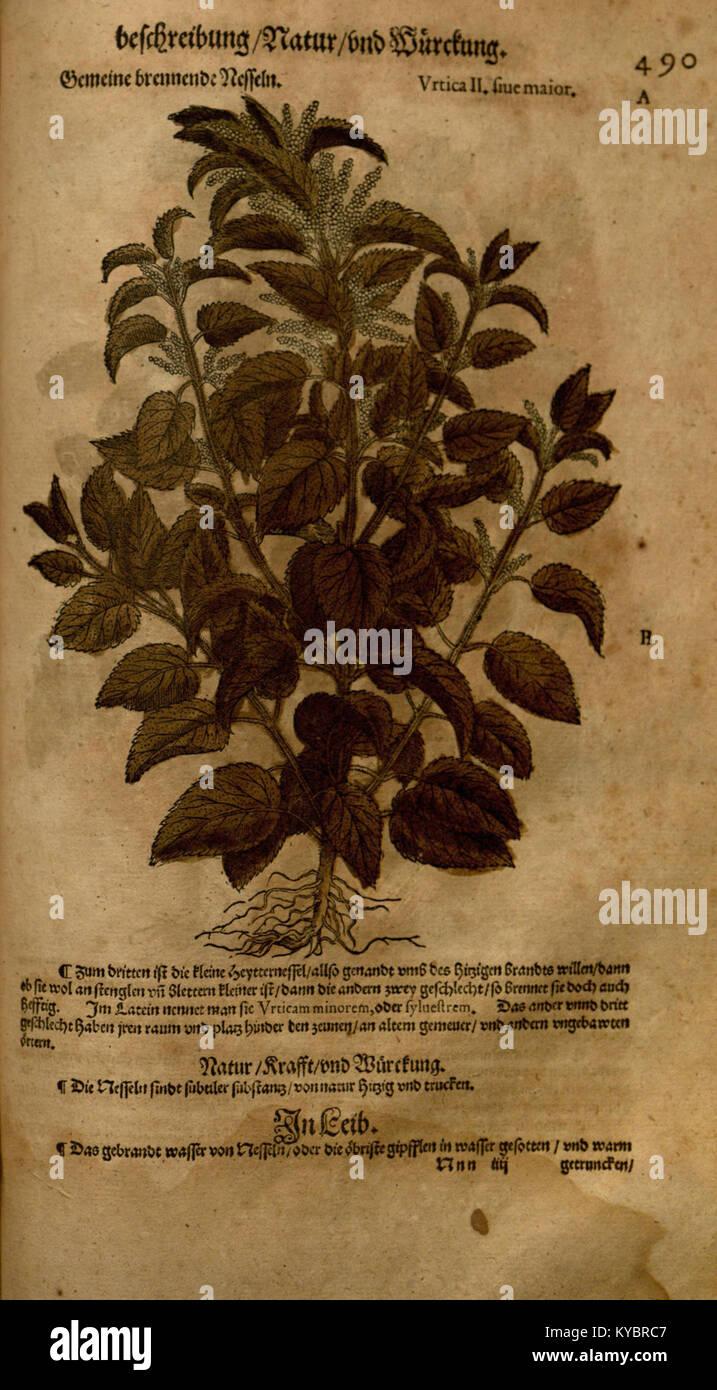 O Tannenbaum Latein.Materia Medica Stock Photos Materia Medica Stock Images Page 41