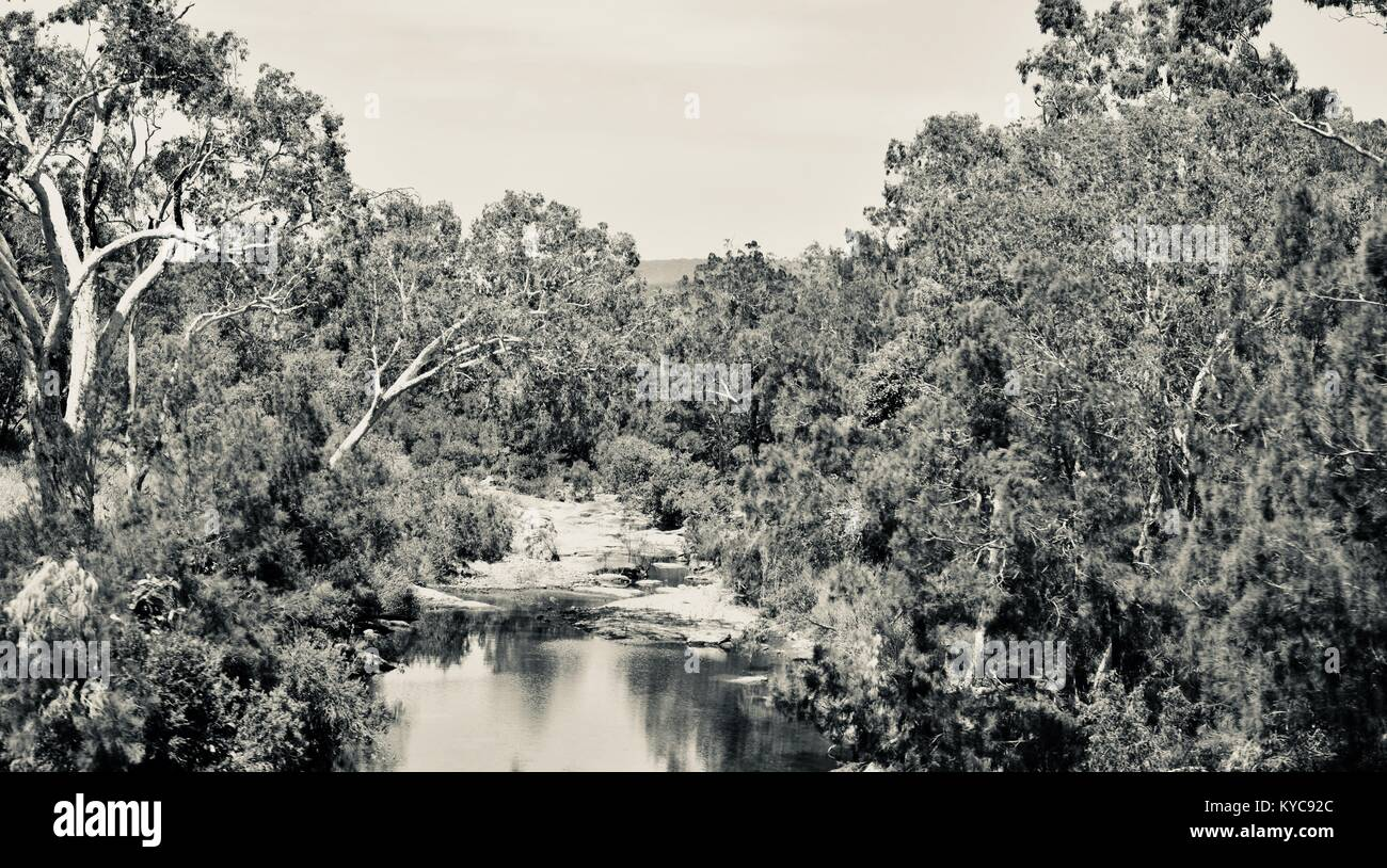 A river runs through the bush near Clairview, eucalyptus dominated dry sclerophyll forest in black and white, Clairview, - Stock Image