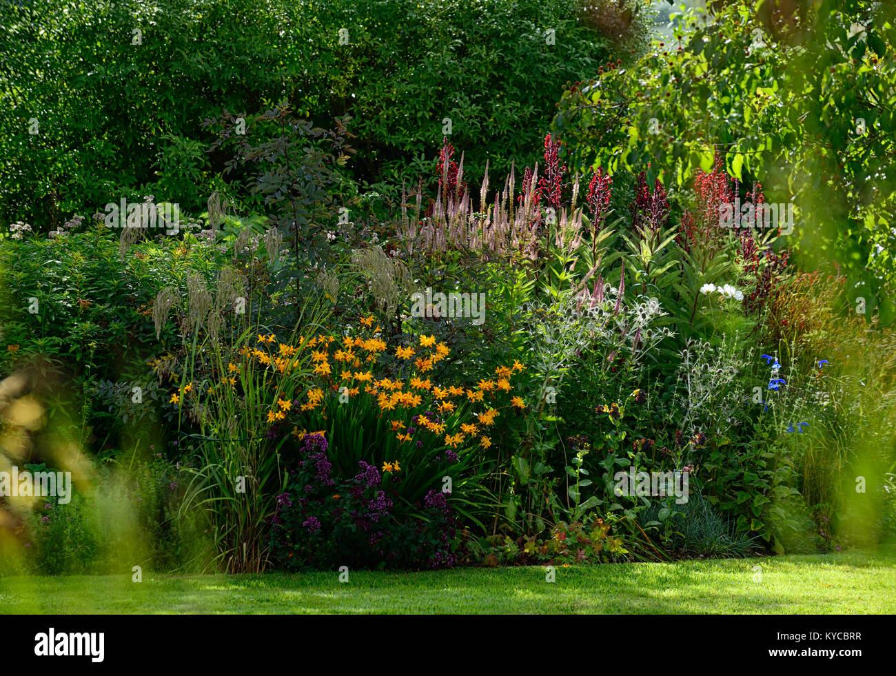 Crocosmia x crocosmiiflora Buttercup,veronicastrum virginicum,lobelia tupa,yellow,pink,red,flower,flowers,spire,spires,spike,spikes,garden,gardens,RM - Stock Image
