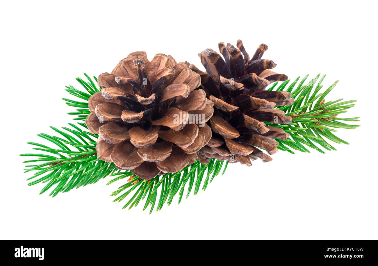 Branch of Christmas tree with pine cones isolated on white background - Stock Image