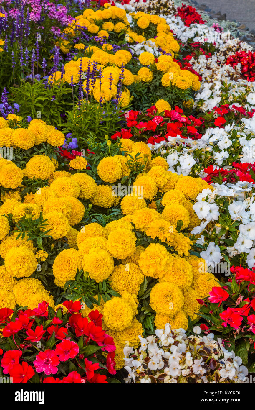 Multicolored summer flowers in Victoria known as the Garden City on Vancouver Island in British Columbia, Canada Stock Photo
