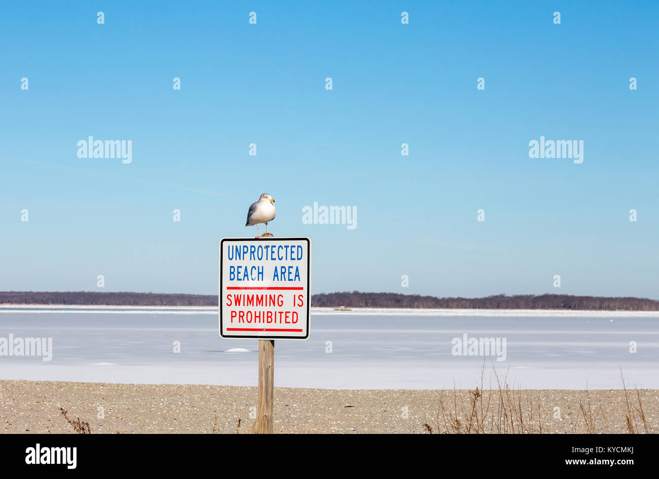seagull sitting on a sign at havens beach sag harbor, ny - Stock Image