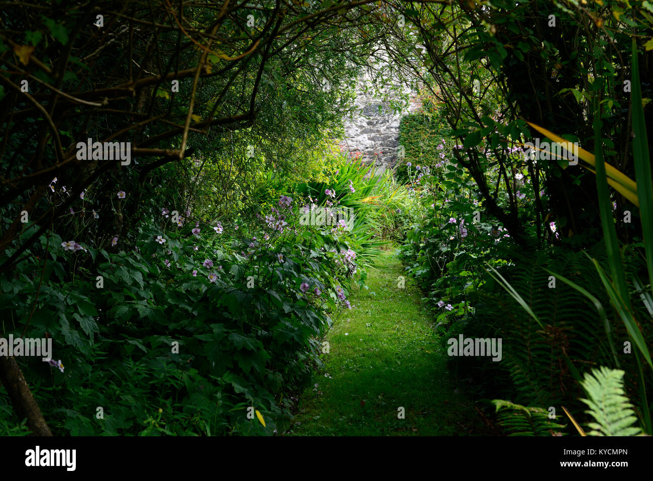 Listoke House, Edwardian garden,gardens,formal,walled,garden,path,pathway,overgrown,lead,leading,dilapidated,secluded,mystery,secret,RM - Stock Image