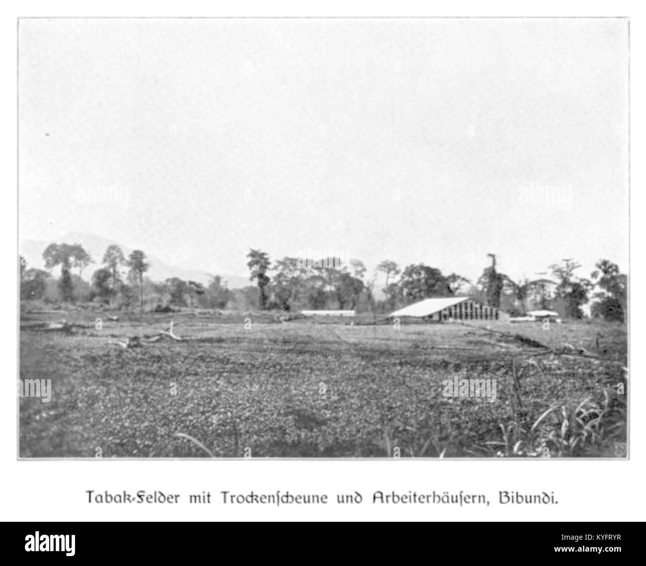 WOHLTMANN(1904) p024 Tabak-Felder mit Trockenscheune und Arbeiterhäusern, Bibundi - Stock Image