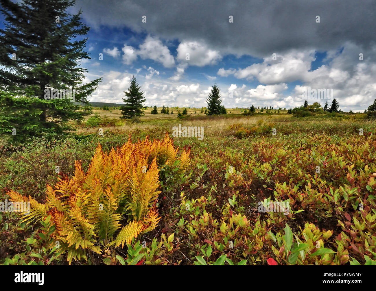 Grassy meadow at Dolly Sods West Virginia - Stock Image