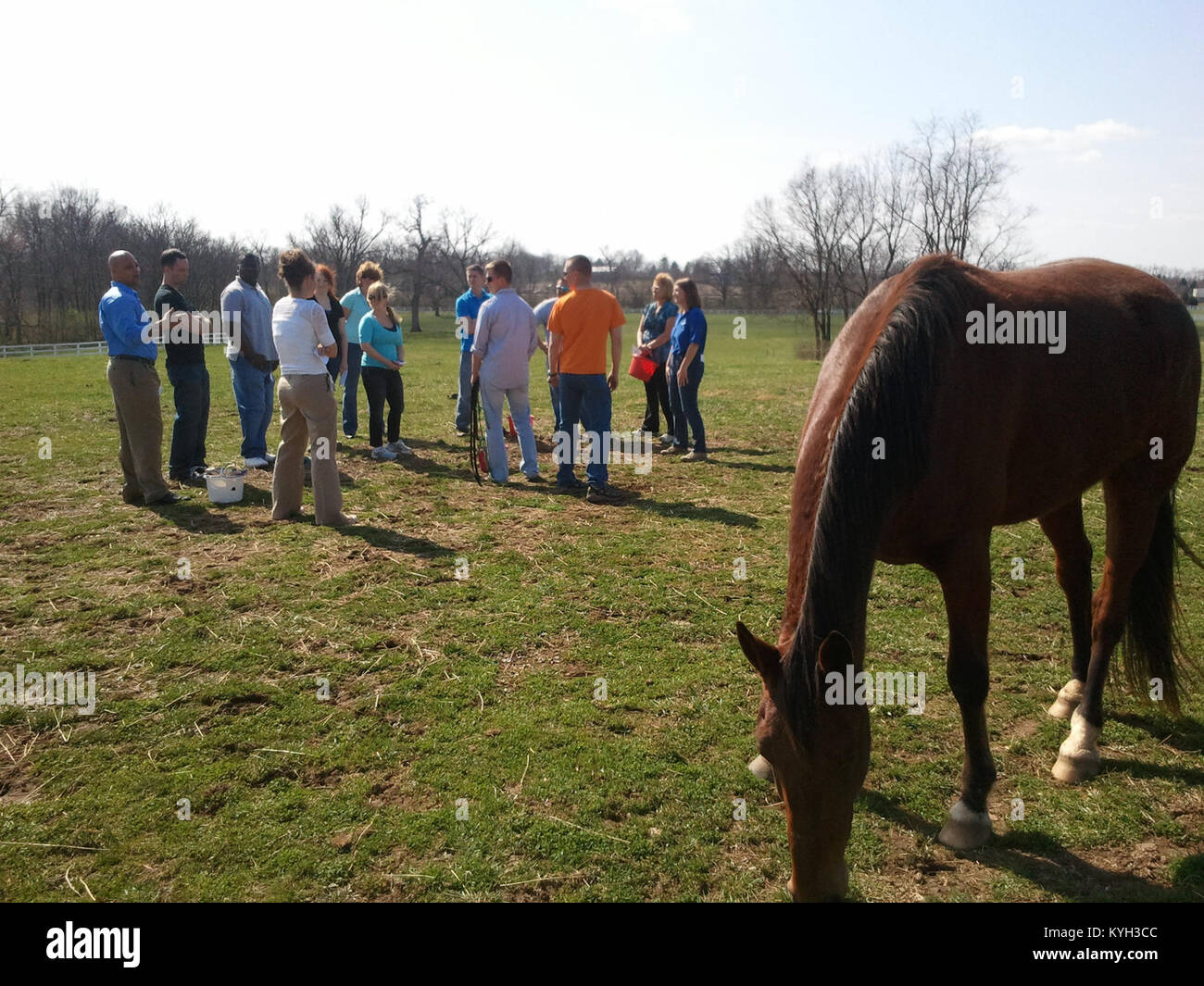 Nathan patiently grazes while members of the Kentucky resilience team discuss the lessons they learned during a - Stock Image