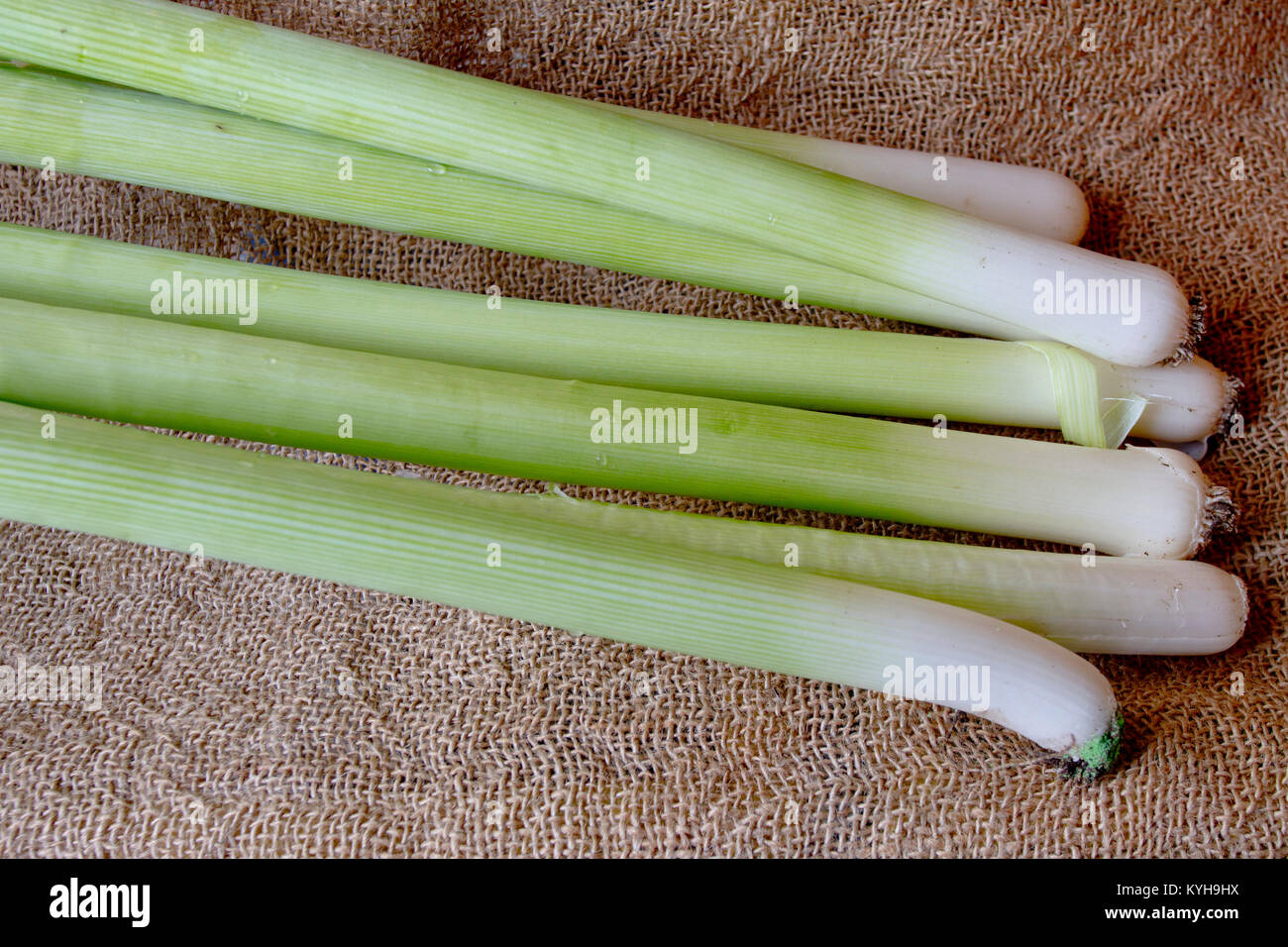 Leek. Fresh organic raw leek vegetable on a burlap background. healthy food. Vitamins background. - Stock Image
