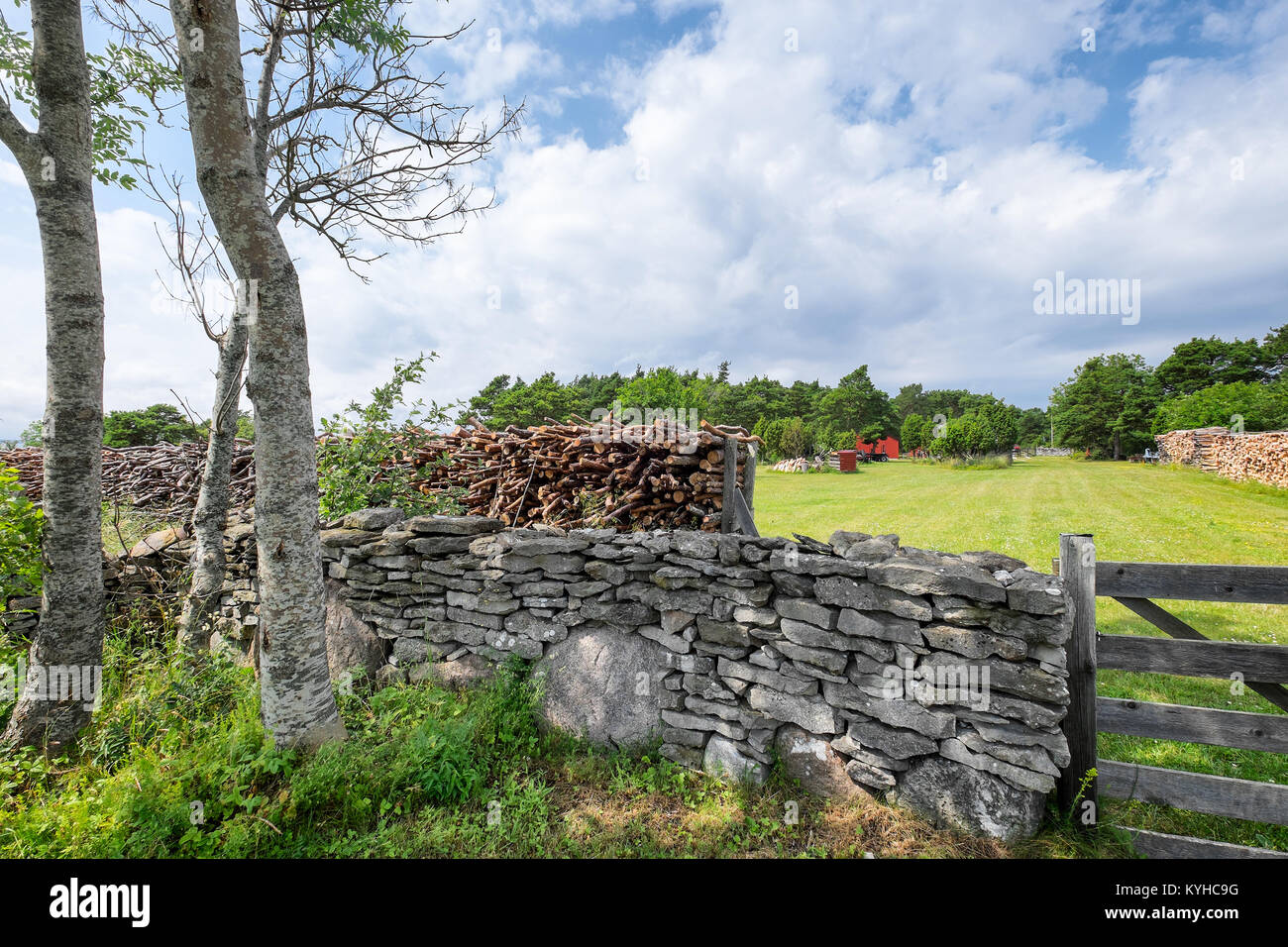 Swedish country landscape with old stone wall and stacked firewood. Location: Gotland, Sweden - Stock Image