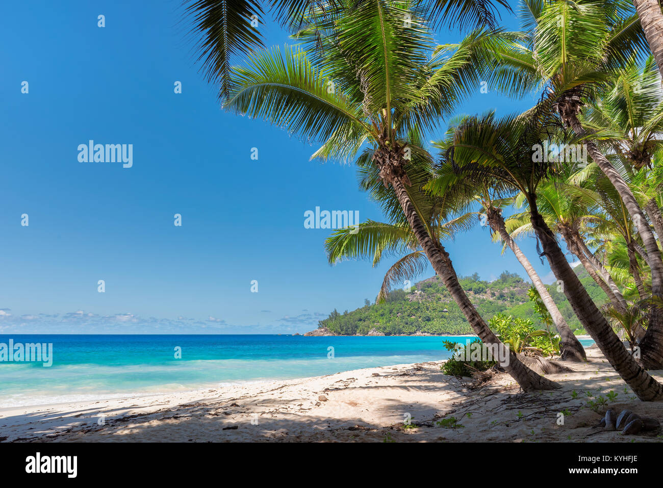 View of nice tropical beach with palms around. - Stock Image