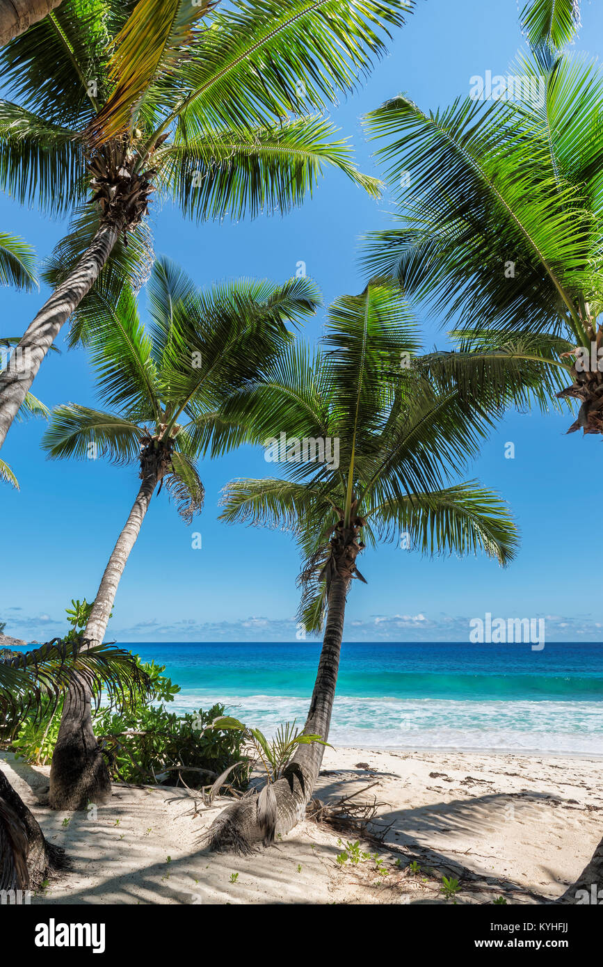 Tropical beach. - Stock Image