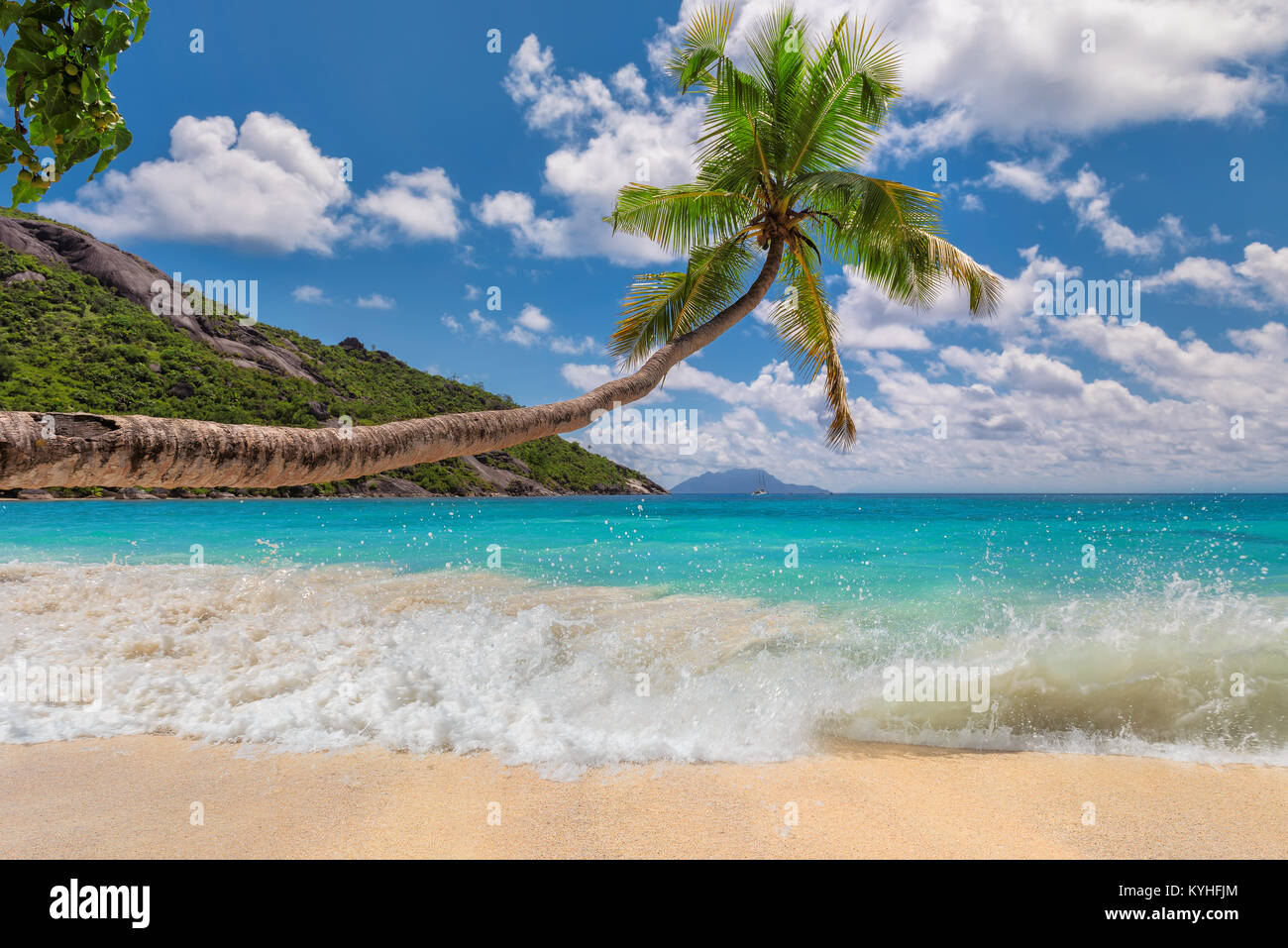 Tropical sandy beach with palm tree. - Stock Image