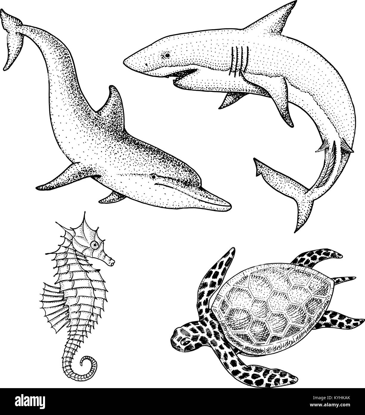 sea creature dolphin and white shark, cheloniidae or green turtle and seahorse. engraved hand drawn in old sketch, - Stock Image