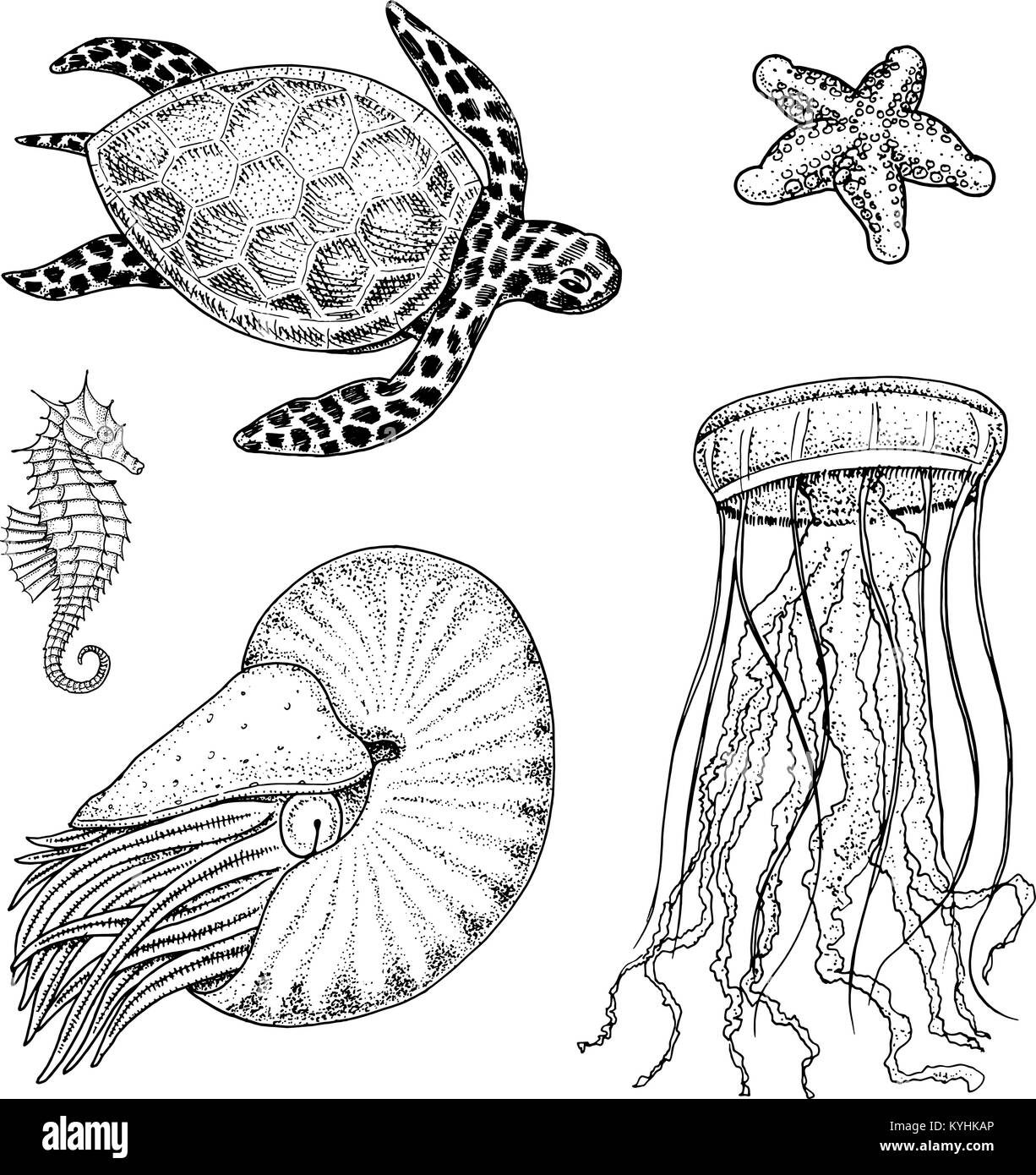 sea creature cheloniidae or green turtle and seahorse. nautilus pompilius, jellyfish and starfish or mollusk. engraved - Stock Image