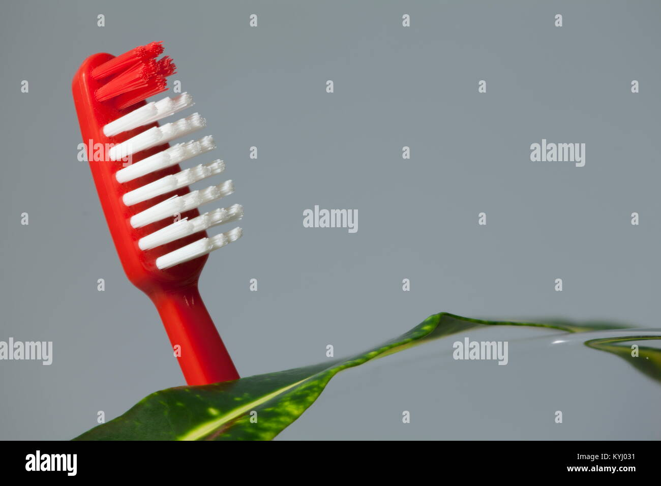 red toothbrush and green leaf concept of cleanliness. Copy space - Stock Image