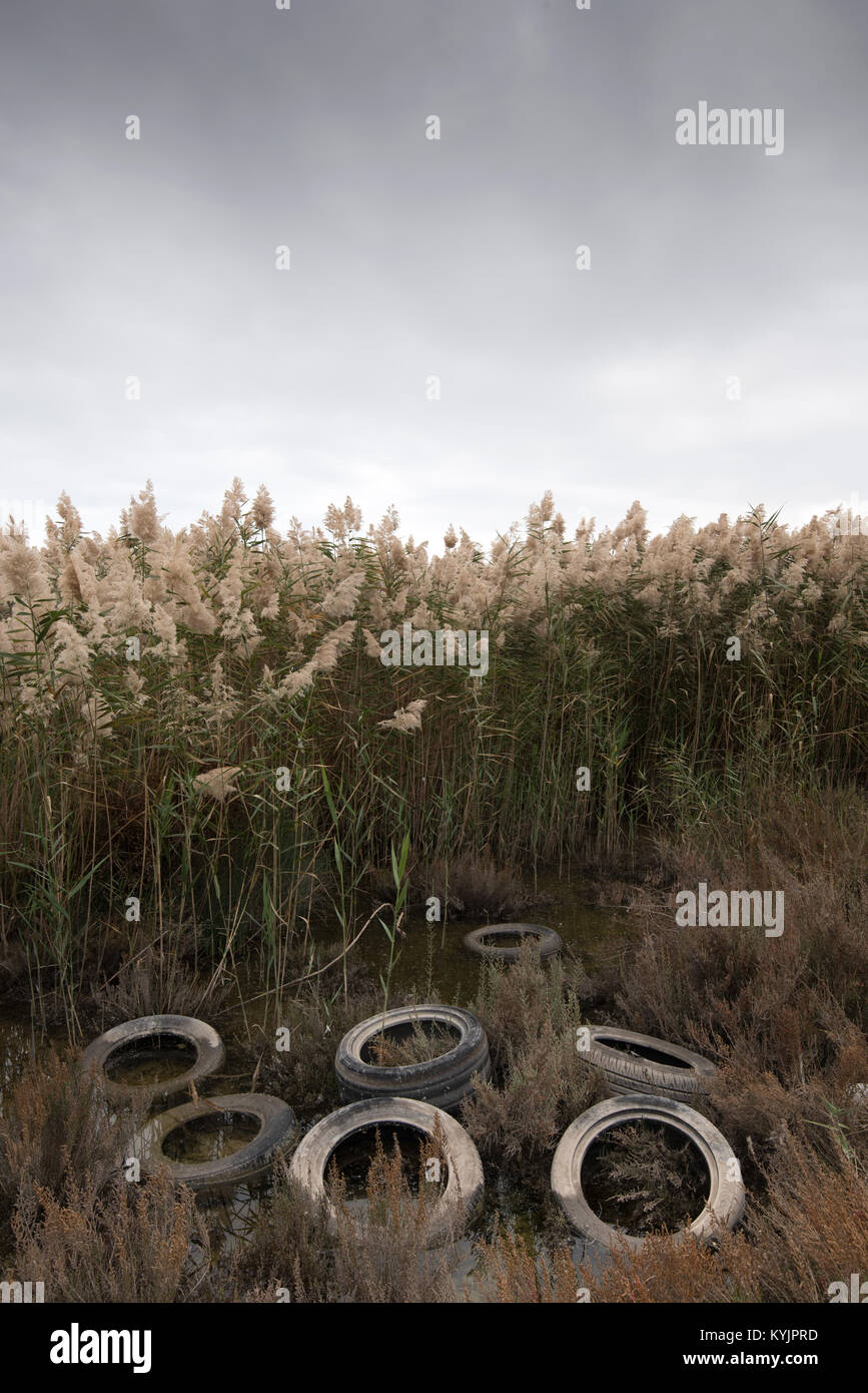 Rusty used vehicle  tires disposed on a reed field creating environmental pollution - Stock Image