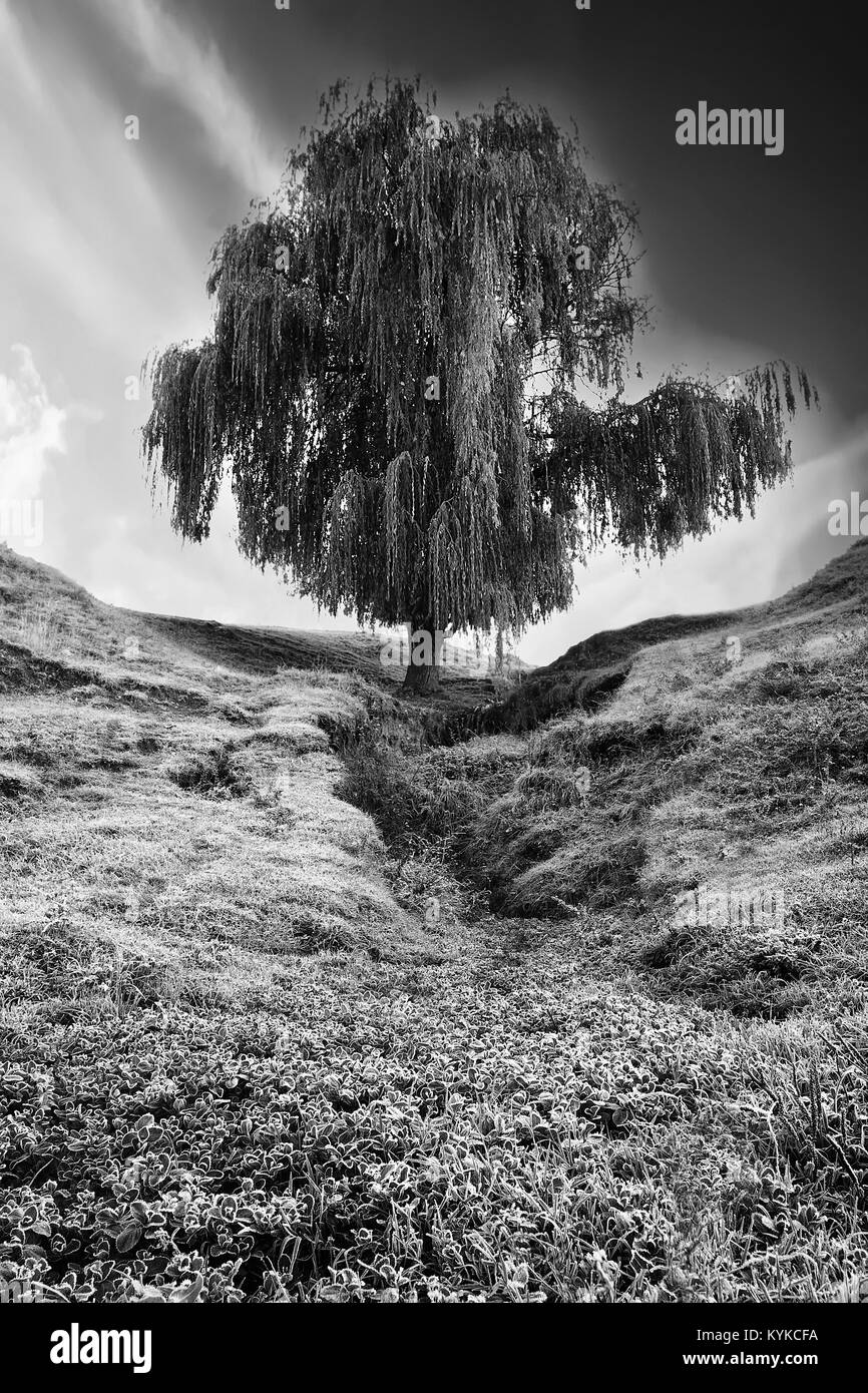 abstract high contrasted black and white vertical landscape with single tree - Stock Image