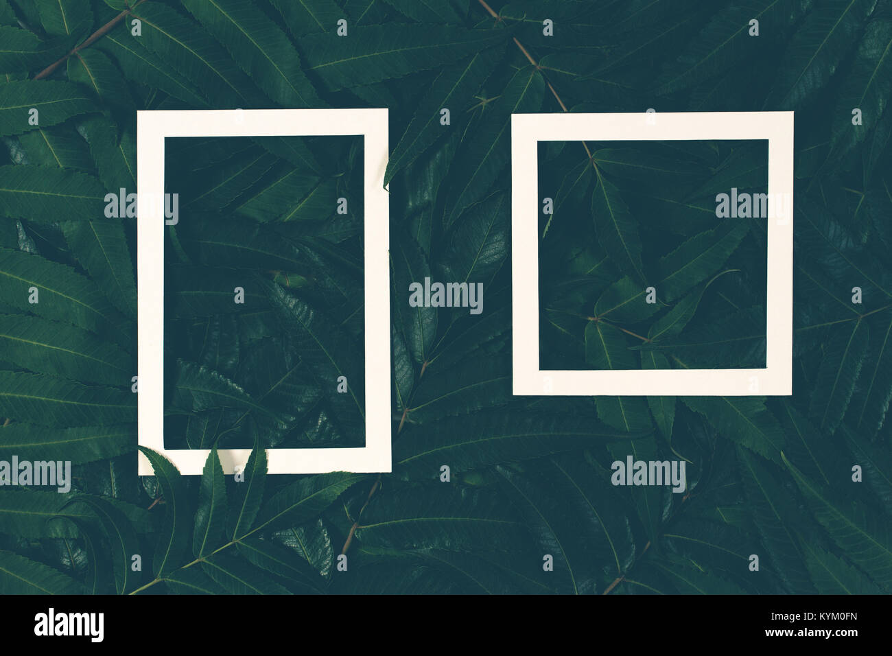 Creative layout made of green leaves with two white frames. Top view, flat lay Stock Photo