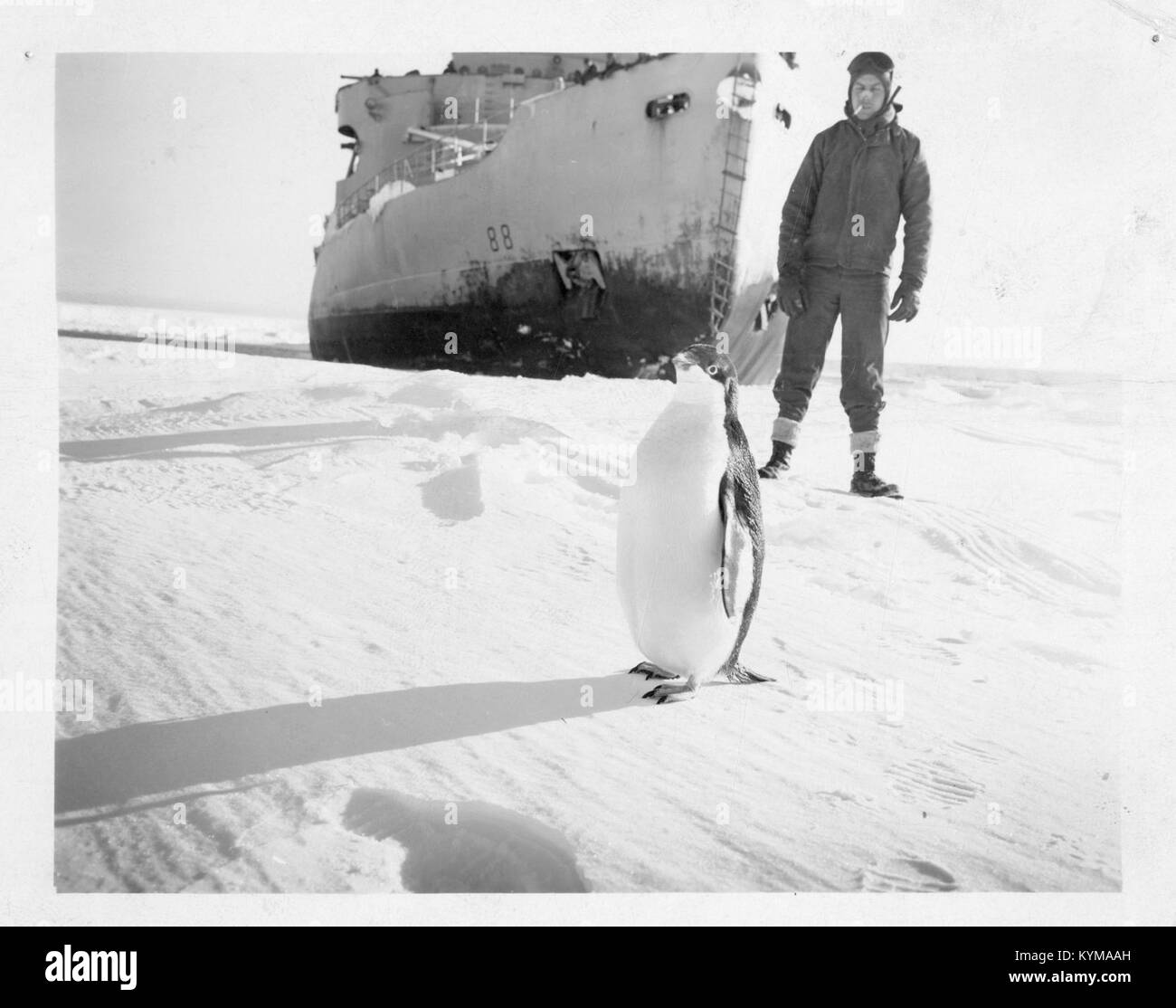 Operation Windmill Expedition Member with Penguin 5243256631 o - Stock Image