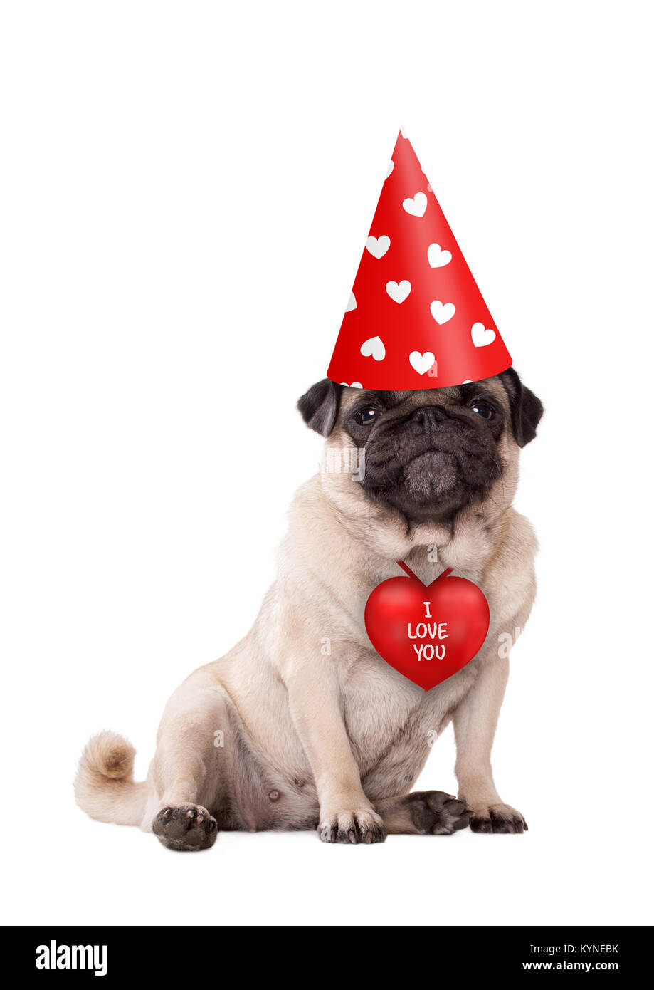 lovely cute Valentine's day puppy pug dog sitting down with red I love you heart and party hat with hearts, - Stock Image
