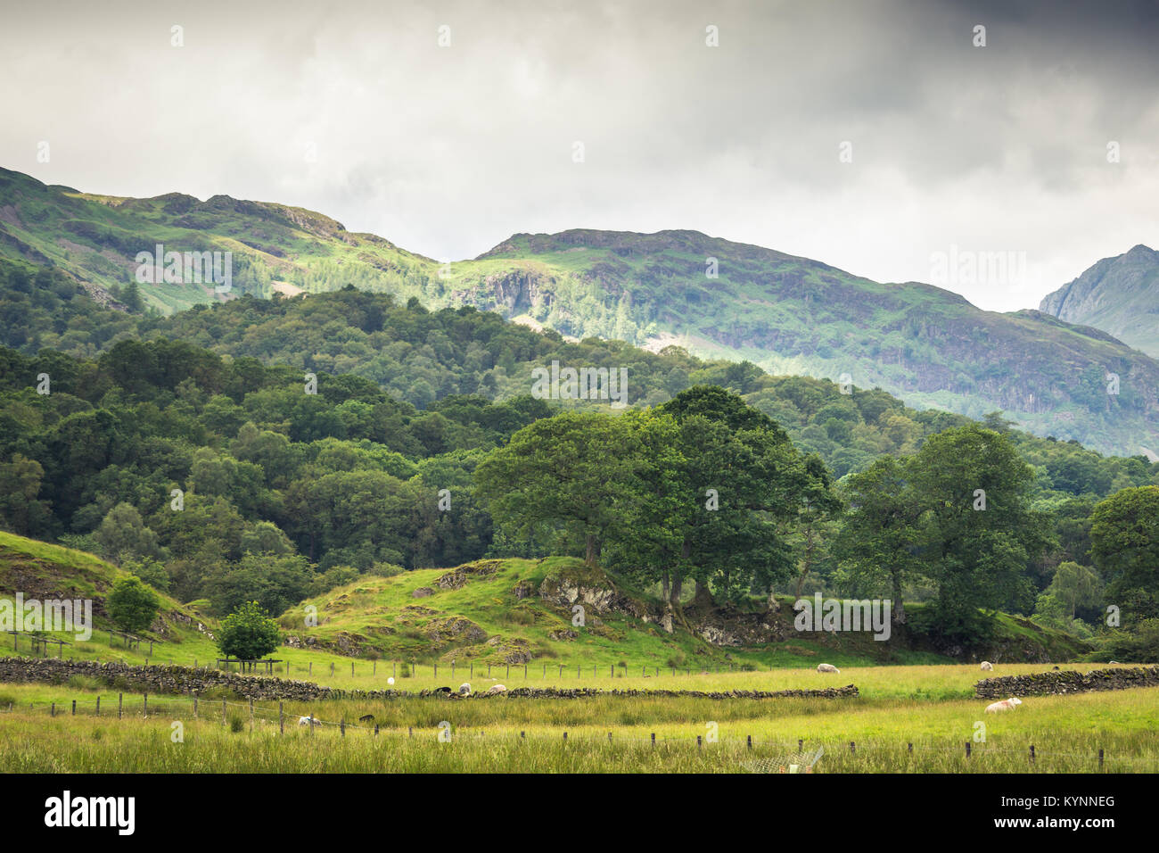 Beautiful vista of the English countryside with sheep grazing in the meadow. - Stock Image