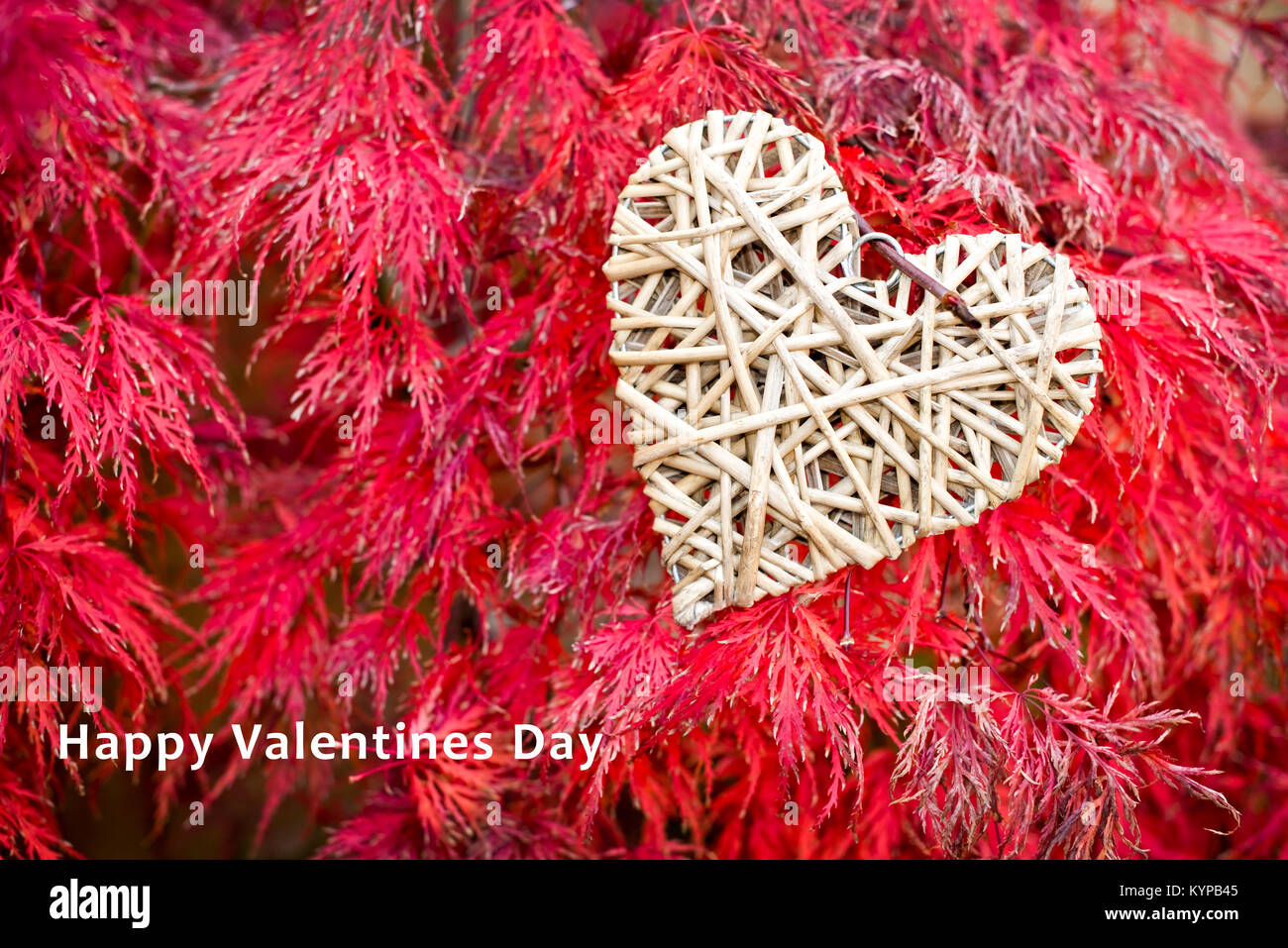 Valentines day card, wooden heart on red maple leaves background - Stock Image