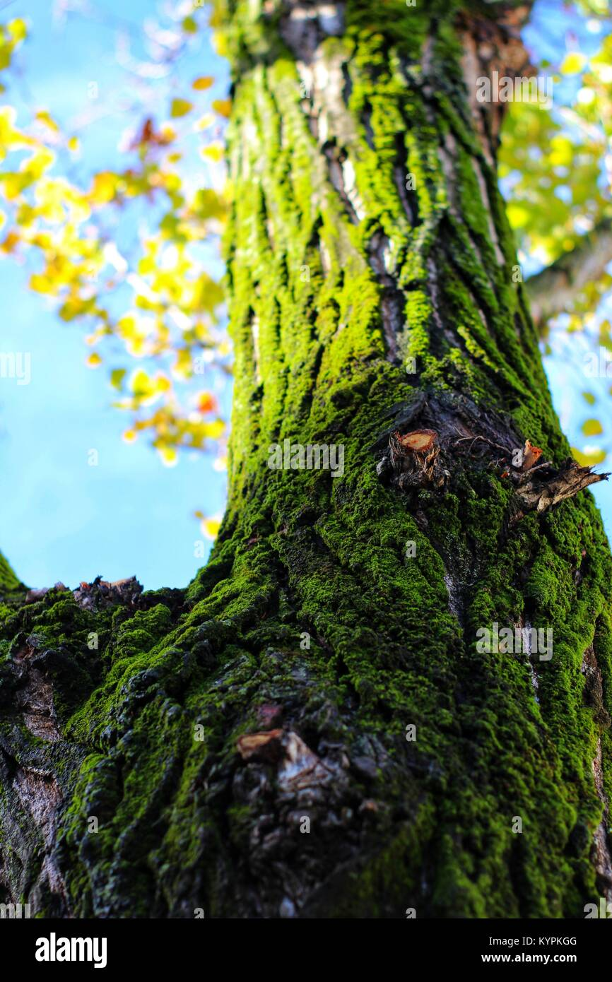 Colorful tree bark texture with fresh moss in the forest Stock Photo ...